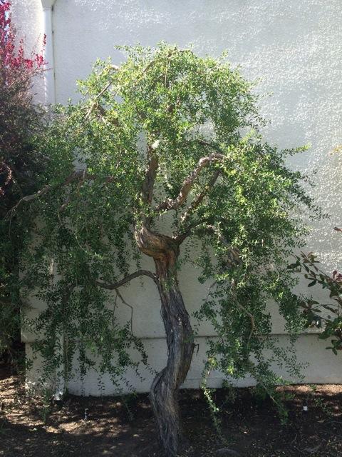 Aesthetic Pruners' Association Presents Intensive Pruning Workshop