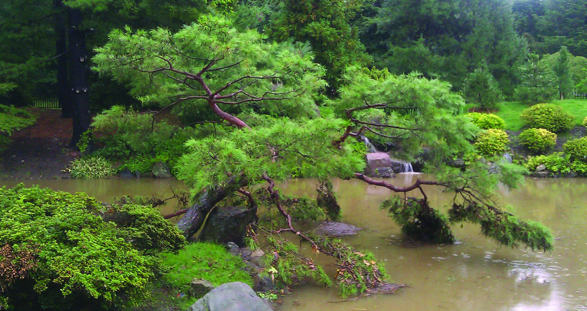By Flood, Pest or Wind: Disaster Preparedness and Response for Japanese Gardens